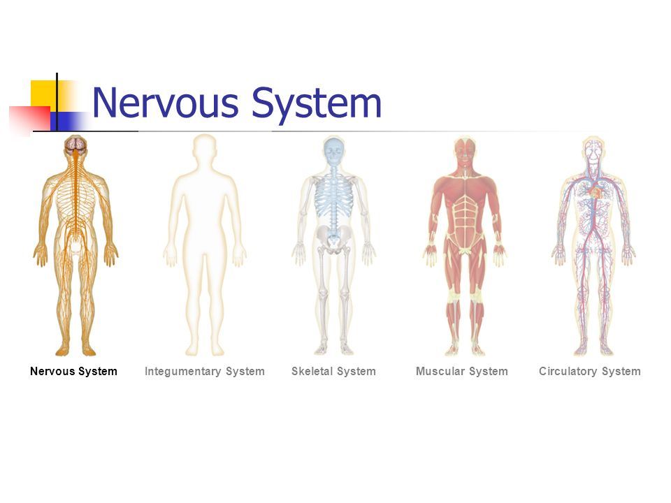 Human Body Systems. Organization of The Body The eleven organ ...