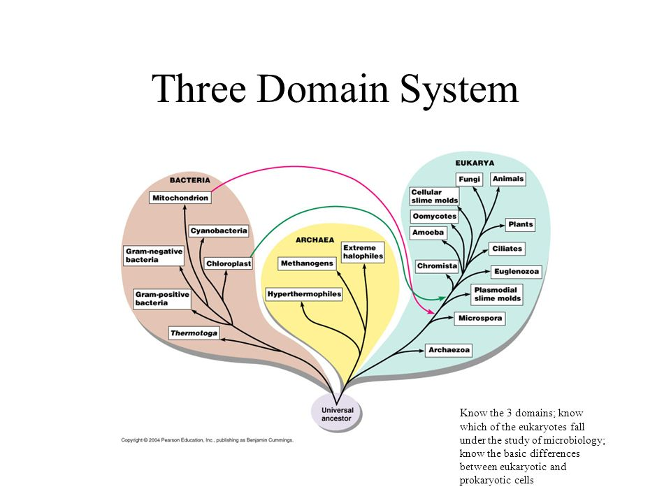 what is the three domain system