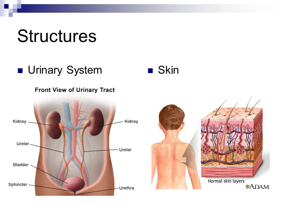 EXCRETION  Structure and Function Lesson 1 Do Now Watch the