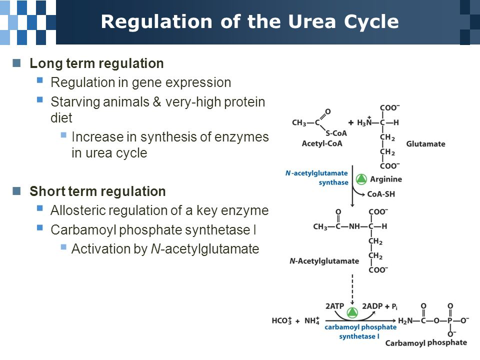 18 2 Nitrogen Excretion and the Urea Cycle Produced in liver