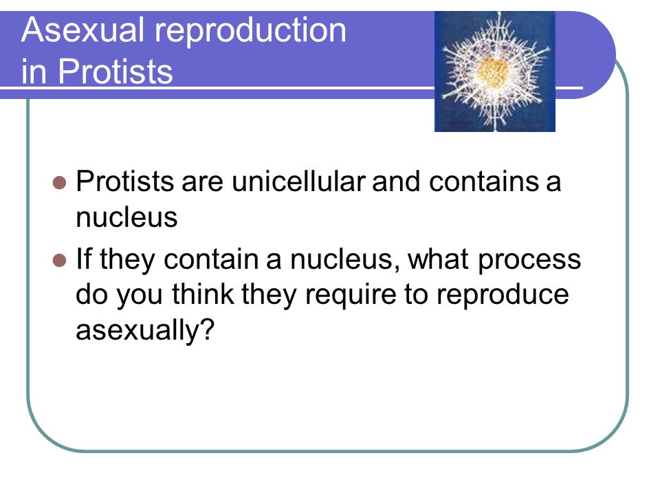 Asexual reproduction in protists