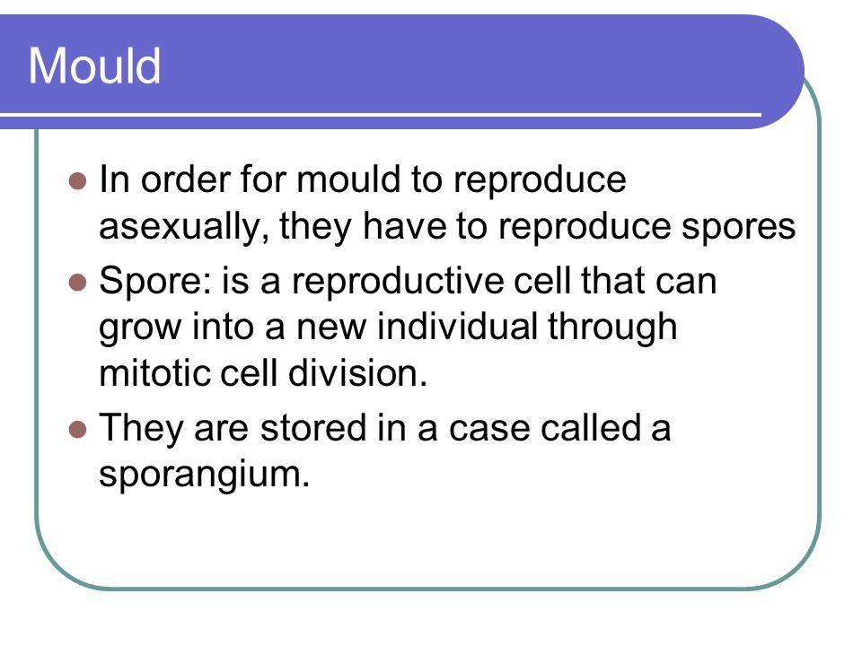 Bacteria reproduce asexually through a process called