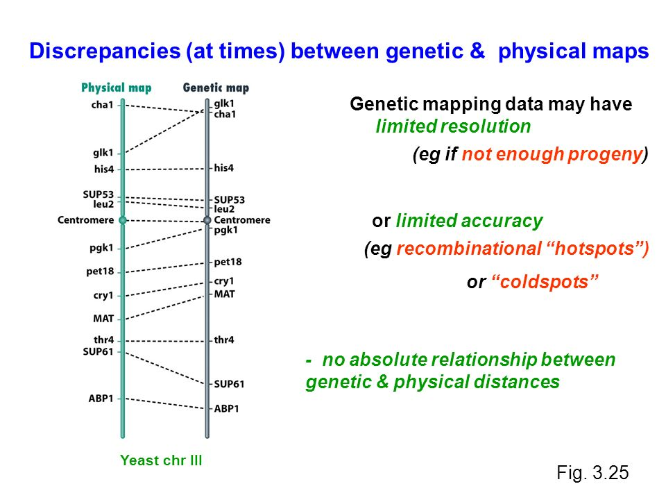 relationship between gene finny microco Each gene, a distinct segment of dna codes for a different protein proteins are important molecules as they are structural parts of an organism, can be enzymes or hormones if a gene has a mutation, the protein may have limited or no function this can cause a.