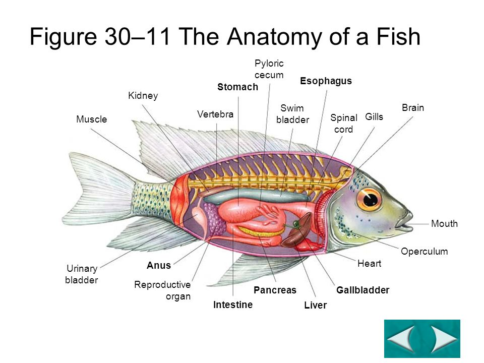 Chordates And Fish Unit Learning Target Objectives Distinguish
