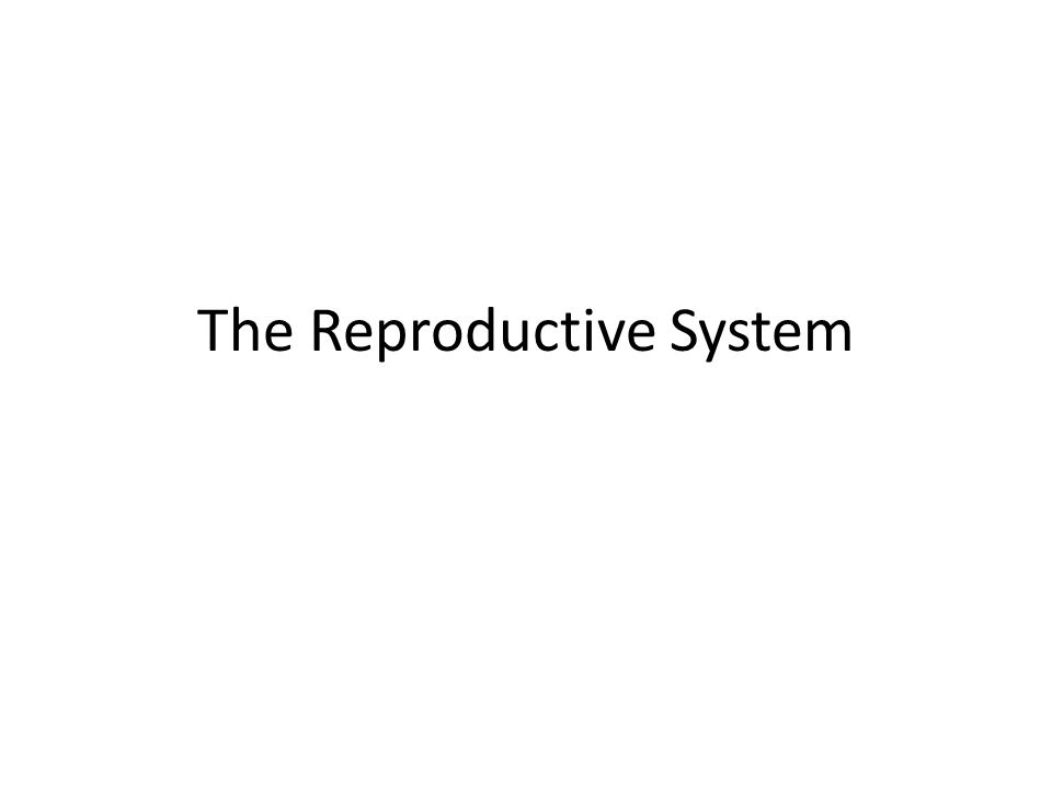 The Reproductive System Male Reproduction The Process By Which A