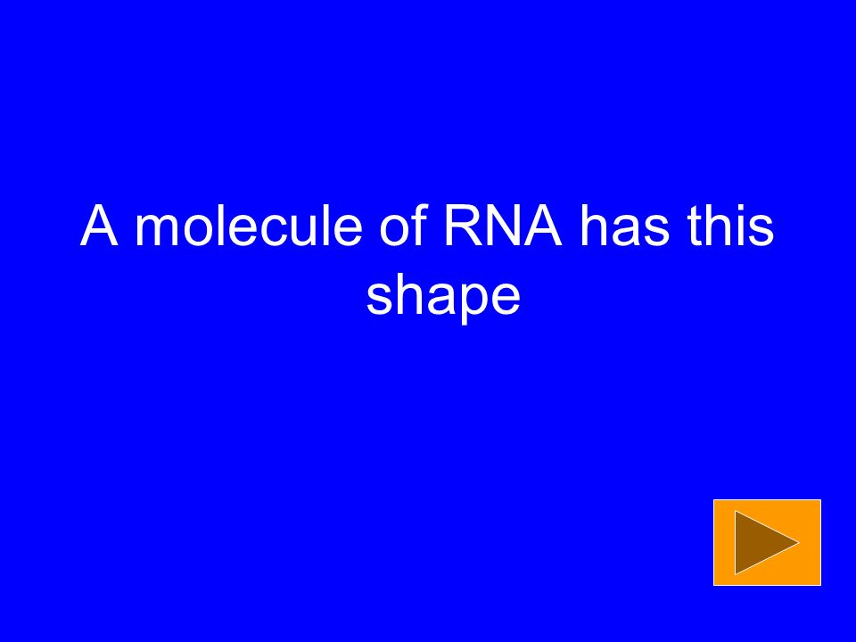 A molecule of RNA has this shape