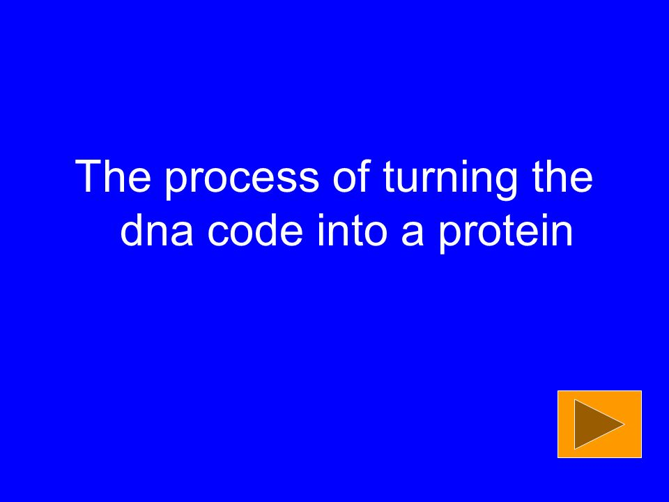 The process of turning the dna code into a protein