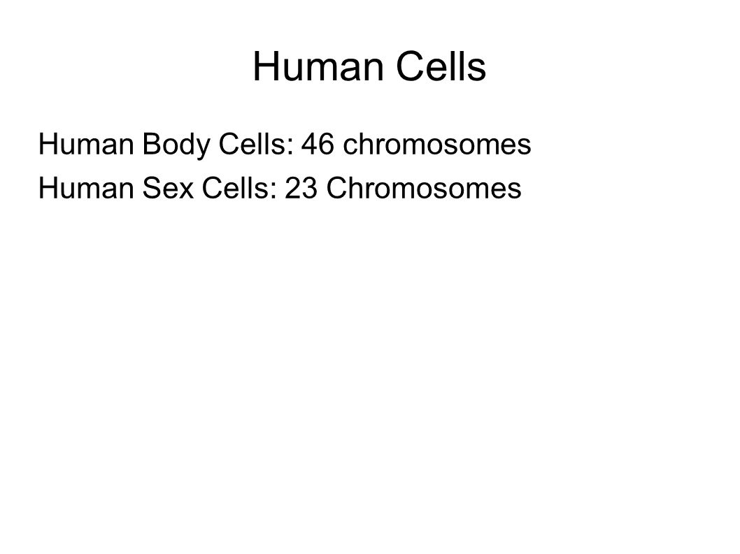 Human Cells Human Body Cells: 46 chromosomes Human Sex Cells: 23 Chromosomes