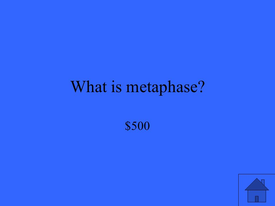 What is metaphase $500