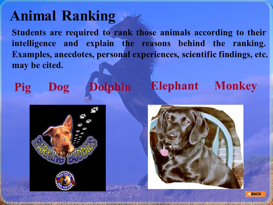 Unit 6 Animal Intelligence  Part I Before ReadingBefore