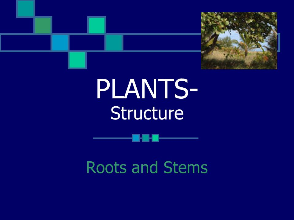 PLANTS- Structure Roots and Stems