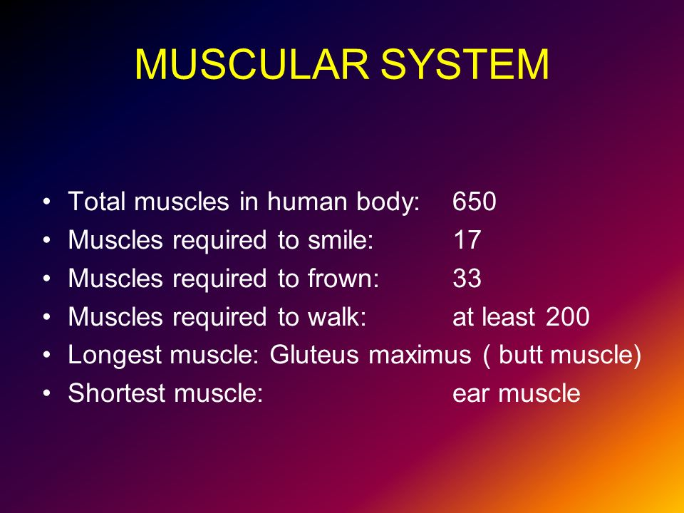 Human Body Total Muscles Science Website Photo Gallery Examples With ...