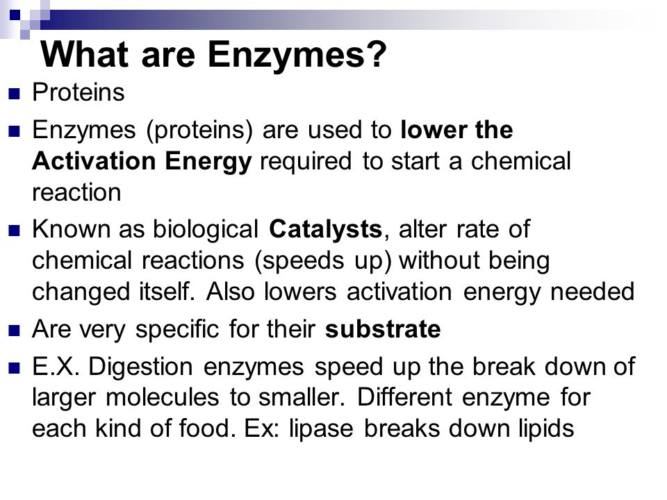 What are Enzymes.