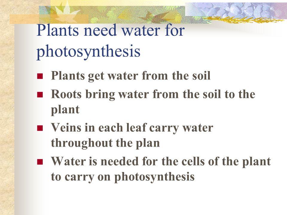 paragraph about plants