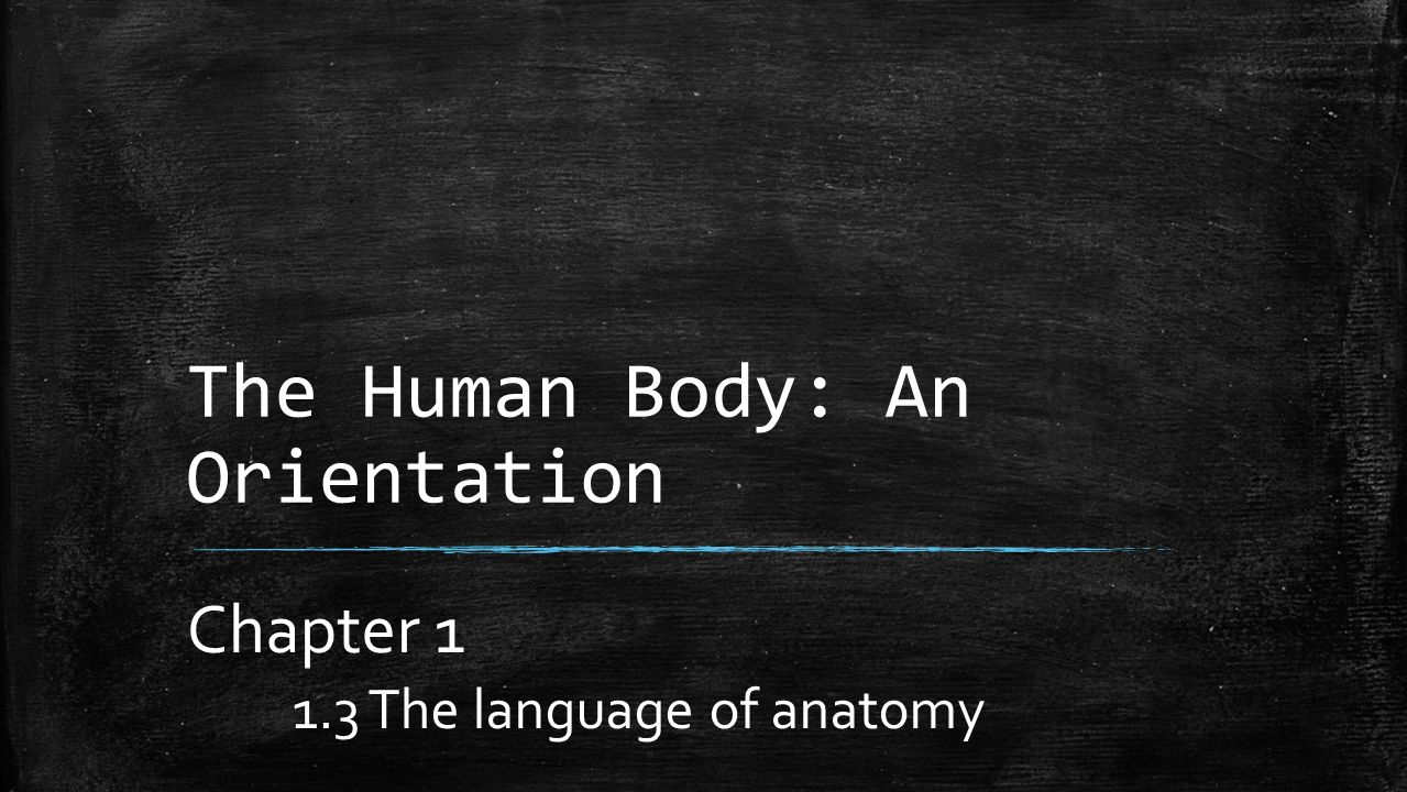 The Human Body: An Orientation Chapter The language of anatomy ...