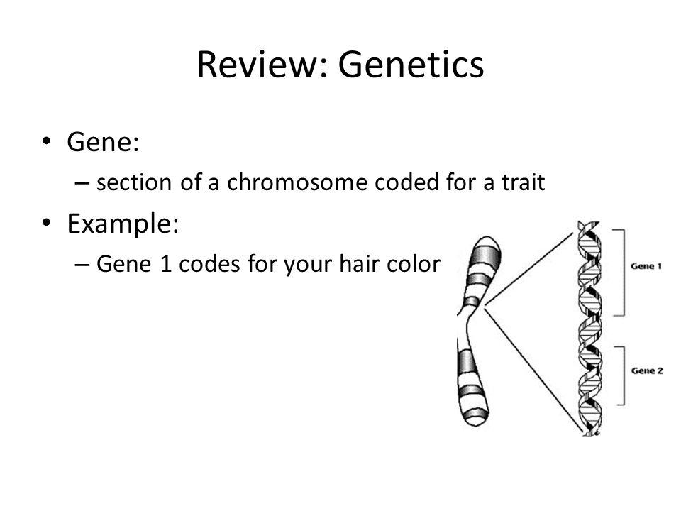 Small Scale Mutations Gene Expression Large Mutations Genetics