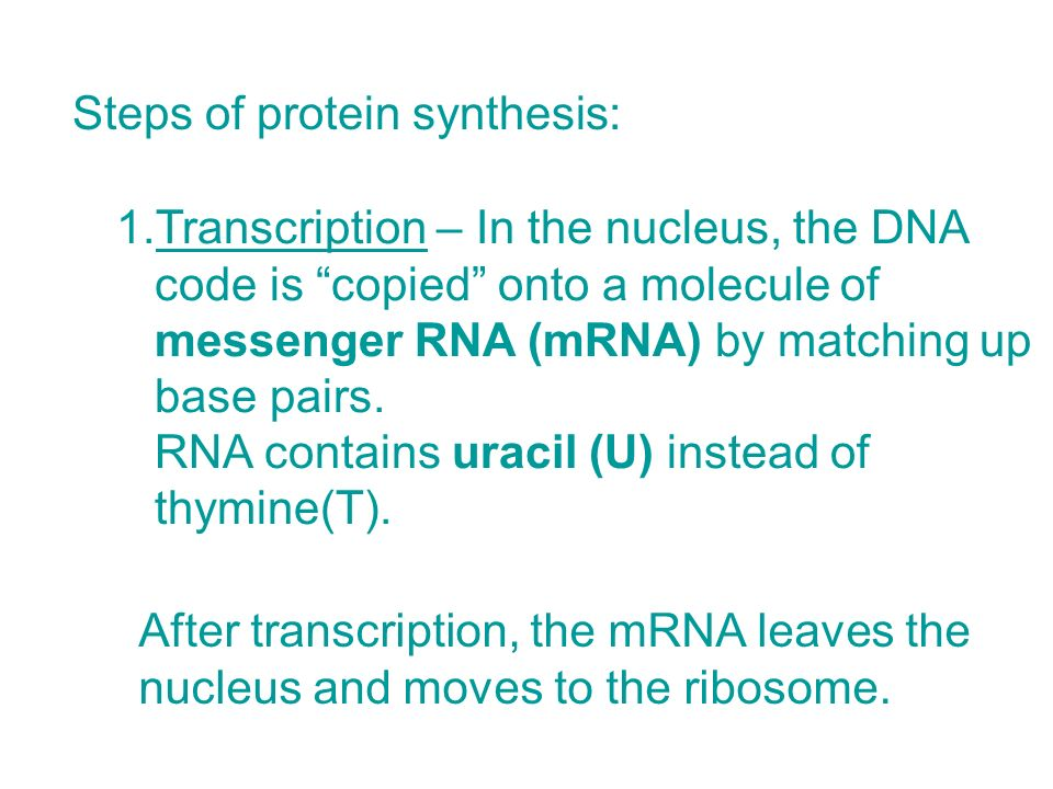 Steps of protein synthesis: 1.Transcription – In the nucleus, the DNA code is copied onto a molecule of messenger RNA (mRNA) by matching up base pairs.