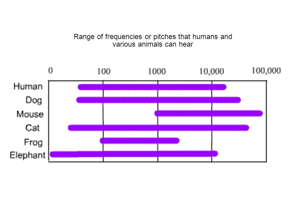 Range of frequencies or pitches that humans and various animals can hear