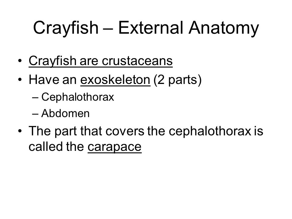 Arthropods Staring the Crayfish Part 1 – Introduction & External ...