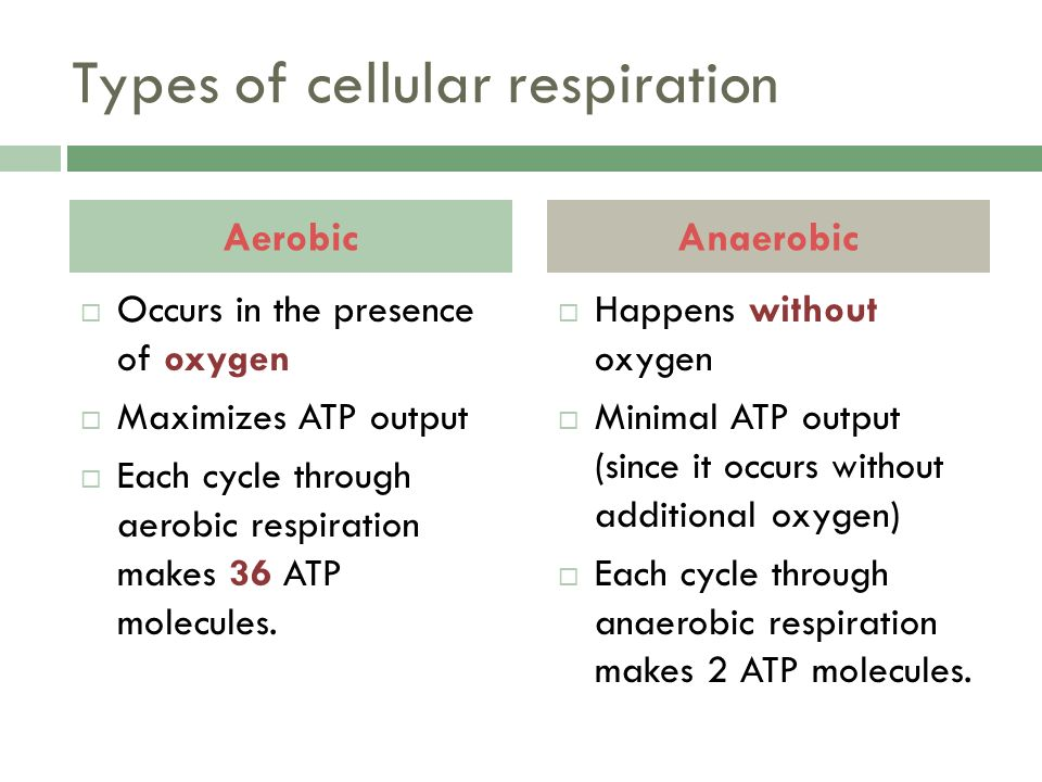 Types of cellular respiration  Occurs in the presence of oxygen  Maximizes ATP output  Each cycle through aerobic respiration makes 36 ATP molecules.
