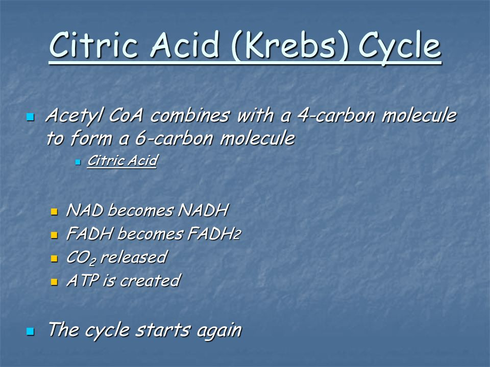 Citric Acid (Krebs) Cycle Acetyl CoA combines with a 4-carbon molecule to form a 6-carbon molecule Acetyl CoA combines with a 4-carbon molecule to form a 6-carbon molecule Citric Acid Citric Acid NAD becomes NADH NAD becomes NADH FADH becomes FADH 2 FADH becomes FADH 2 CO 2 released CO 2 released ATP is created ATP is created The cycle starts again The cycle starts again