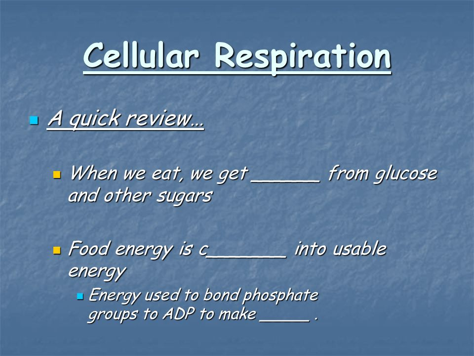 A quick review… A quick review… When we eat, we get ______ from glucose and other sugars When we eat, we get ______ from glucose and other sugars Food energy is c_______ into usable energy Food energy is c_______ into usable energy Energy used to bond phosphate groups to ADP to make _____.