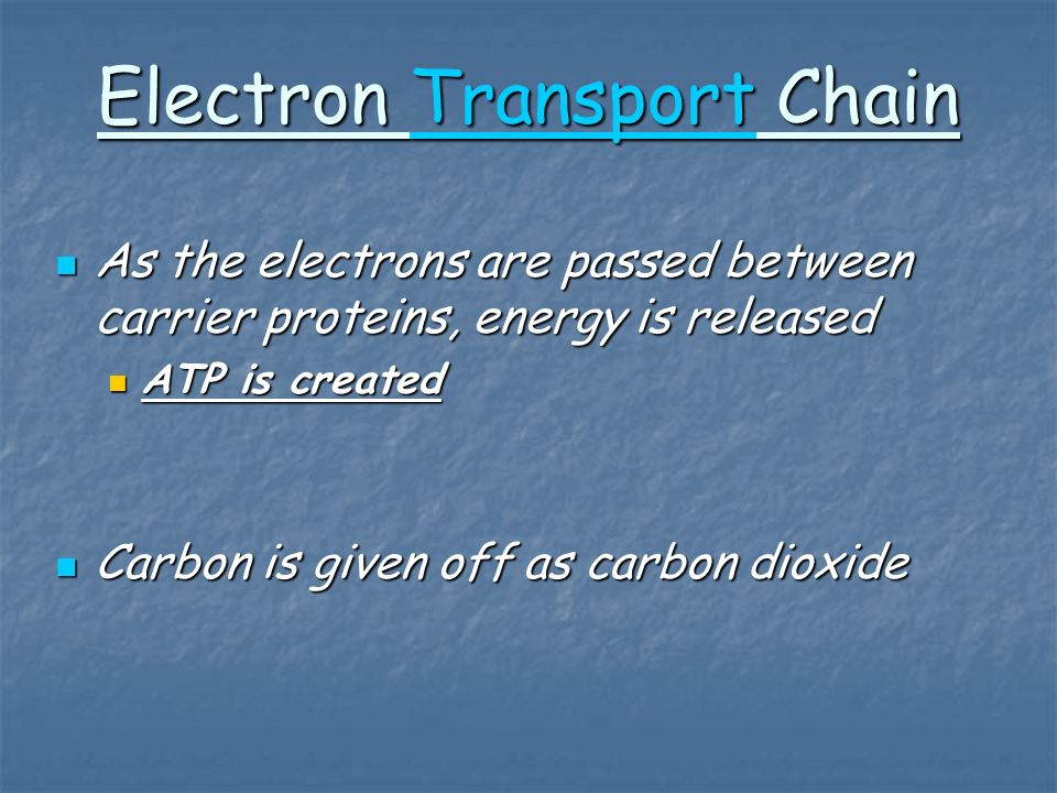 Electron Transport Chain Transport As the electrons are passed between carrier proteins, energy is released As the electrons are passed between carrier proteins, energy is released ATP is created ATP is created Carbon is given off as carbon dioxide Carbon is given off as carbon dioxide
