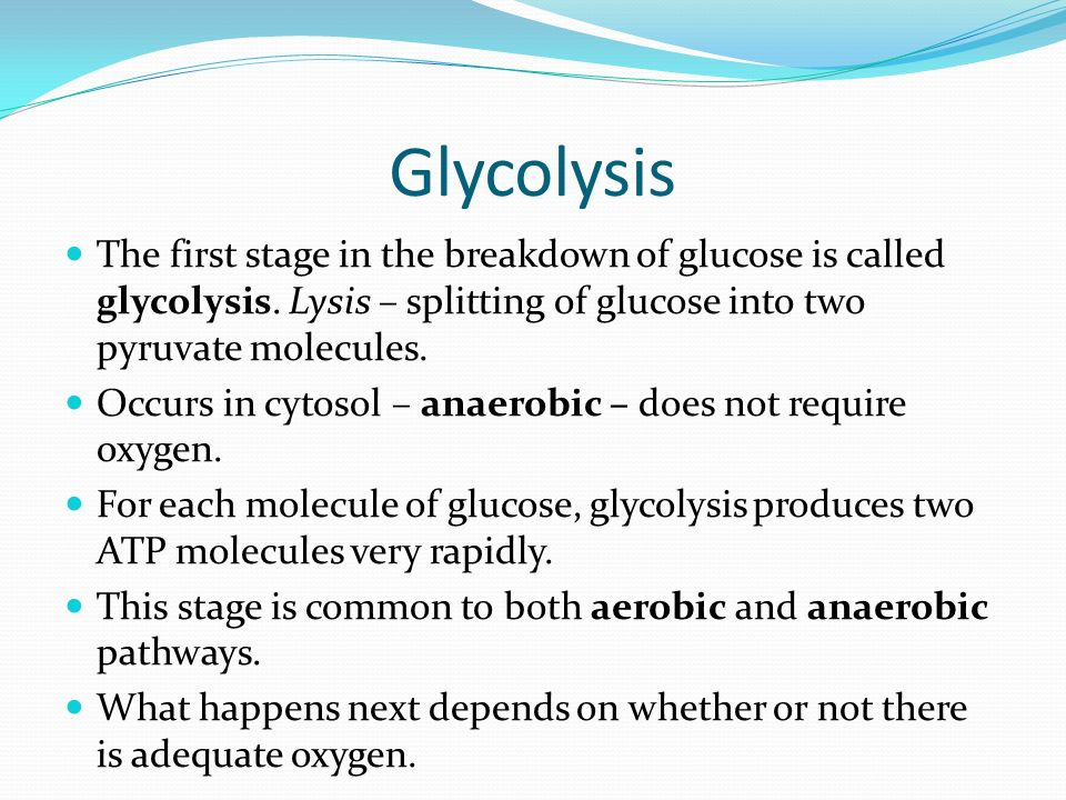 Glycolysis The first stage in the breakdown of glucose is called glycolysis.