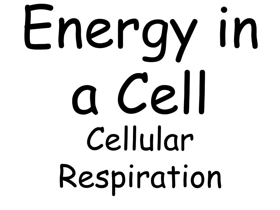 Energy in a Cell Cellular Respiration