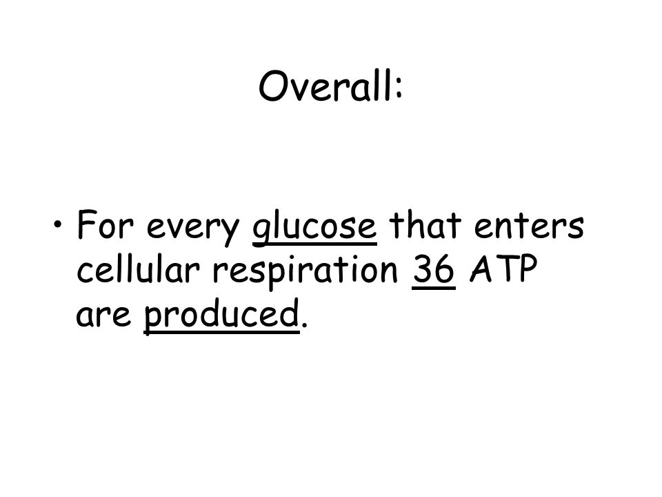 Overall: For every glucose that enters cellular respiration 36 ATP are produced.