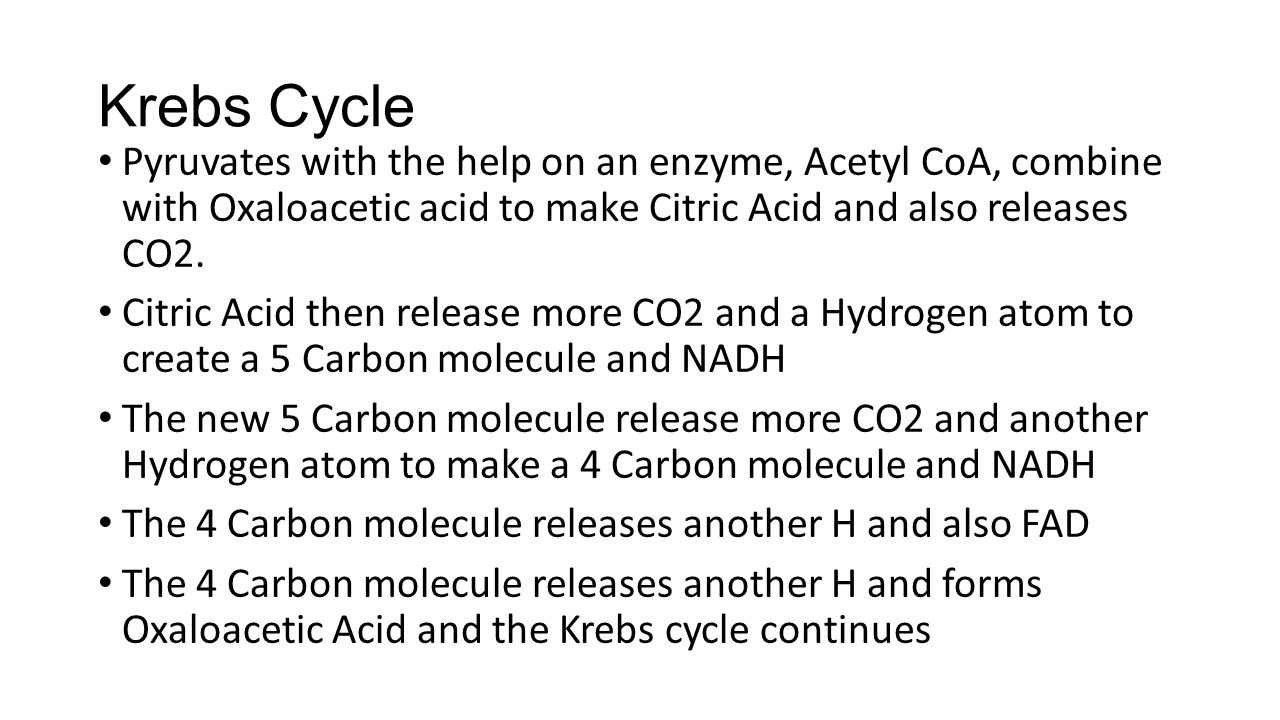 Krebs Cycle Pyruvates with the help on an enzyme, Acetyl CoA, combine with Oxaloacetic acid to make Citric Acid and also releases CO2.