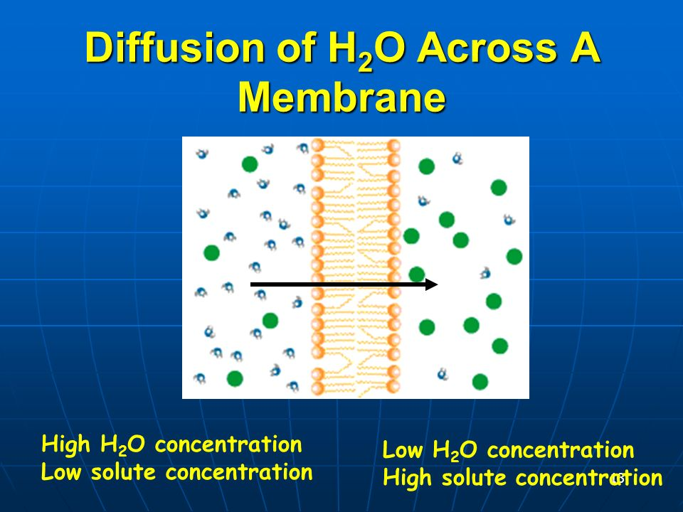 12 Osmosis Diffusion of water across a membrane Diffusion of water across a membrane Moves from HIGH water molecule concentration (low solute) to LOW water molecule concentration (high solute) Moves from HIGH water molecule concentration (low solute) to LOW water molecule concentration (high solute) Diffusion across a membrane Semipermeable membrane
