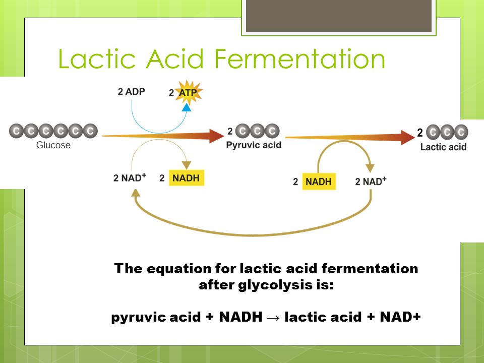 Lactic Acid Fermentation The equation for lactic acid fermentation after glycolysis is: pyruvic acid + NADH → lactic acid + NAD+