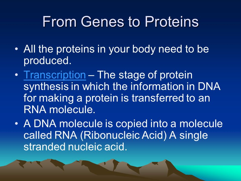 From Genes to Proteins All the proteins in your body need to be produced.