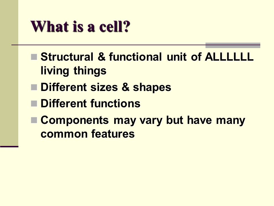 Attractive Exercise 4 The Cell Anatomy And Division Component ...