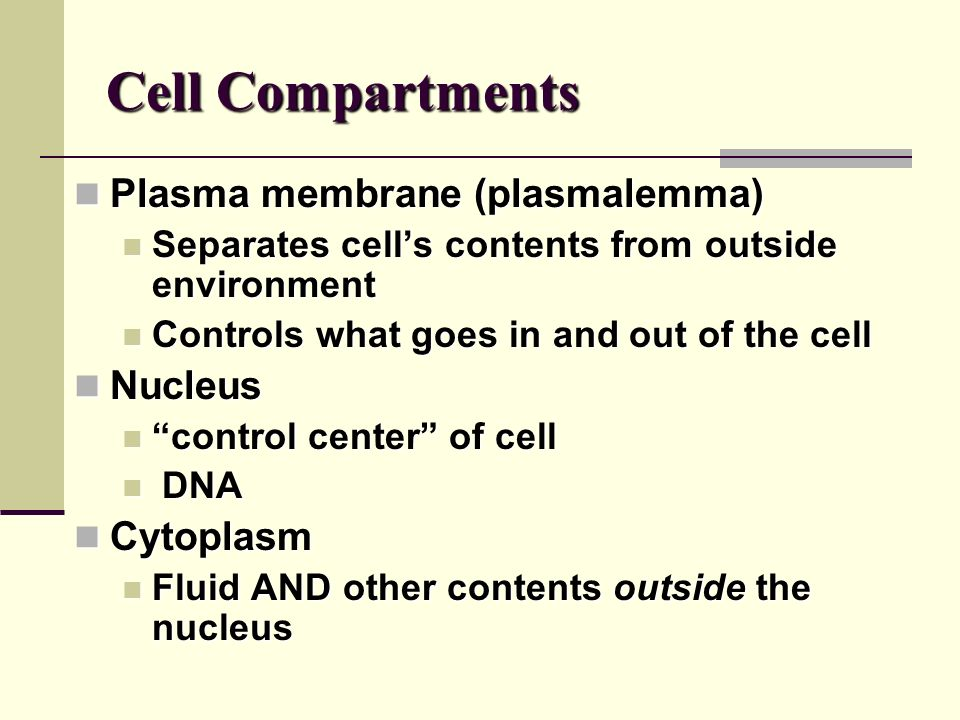 Exercise 4 The Cell—Anatomy & Division. What is a cell? Structural ...