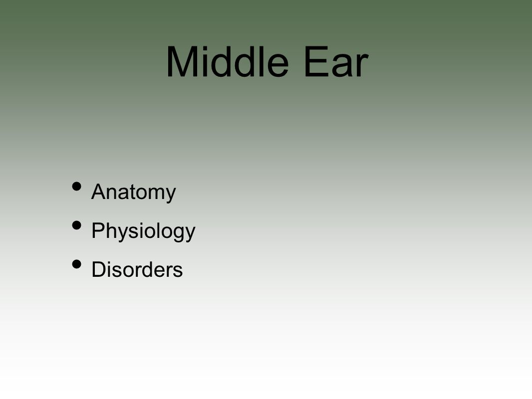 Anatomy Physiology Disorders Middle Ear The Big Picture Eustachian