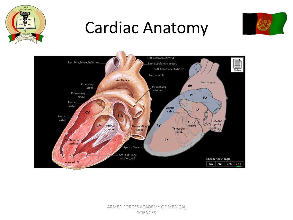 Cardiovascular Anatomy and Physiology AFAMS Residency Orientation ...