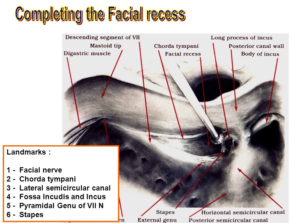 Old Fashioned Facial Recess Anatomy Image Collection - Anatomy And ...