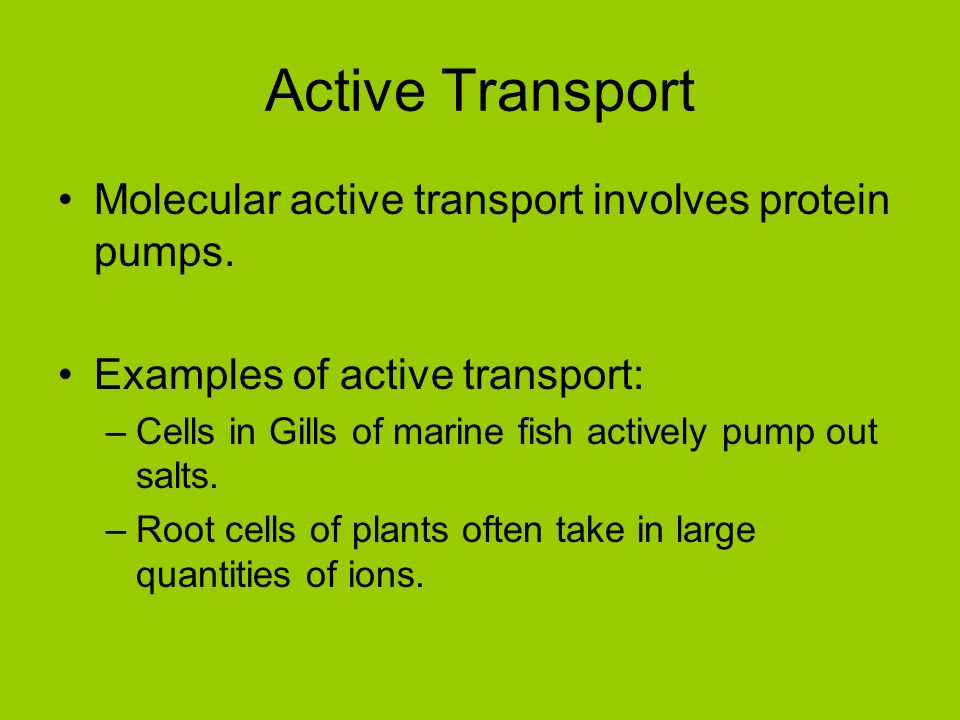 Cell Transport Biology 11 Two Parts Of A Solution Solute A