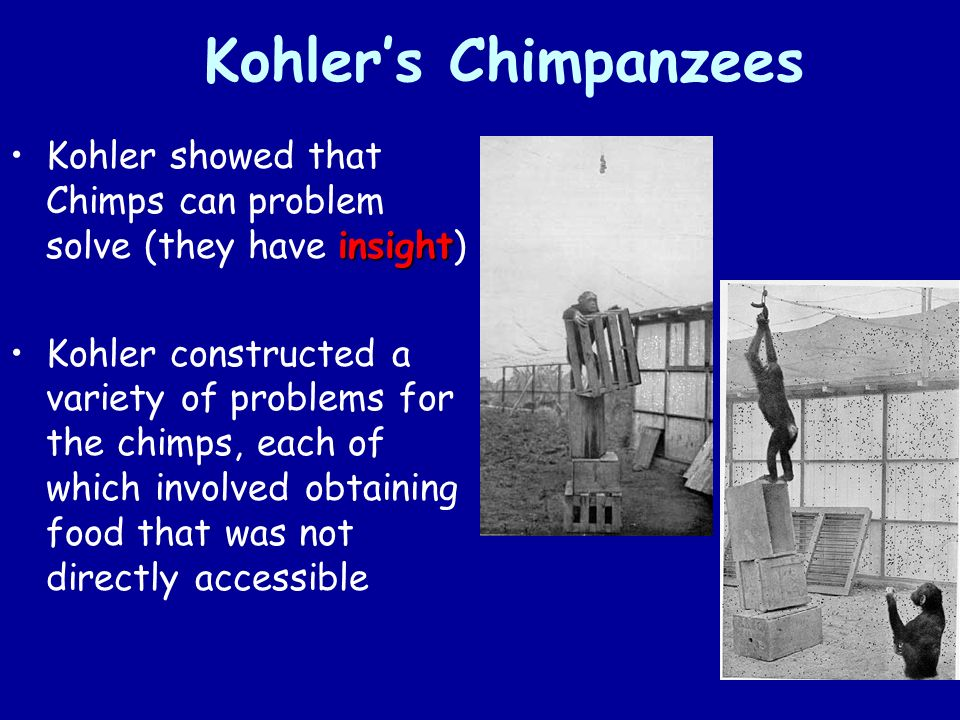 Kohler's Chimpanzees insightKohler showed that Chimps can problem solve (they have insight) Kohler constructed a variety of problems for the chimps, each of which involved obtaining food that was not directly accessible