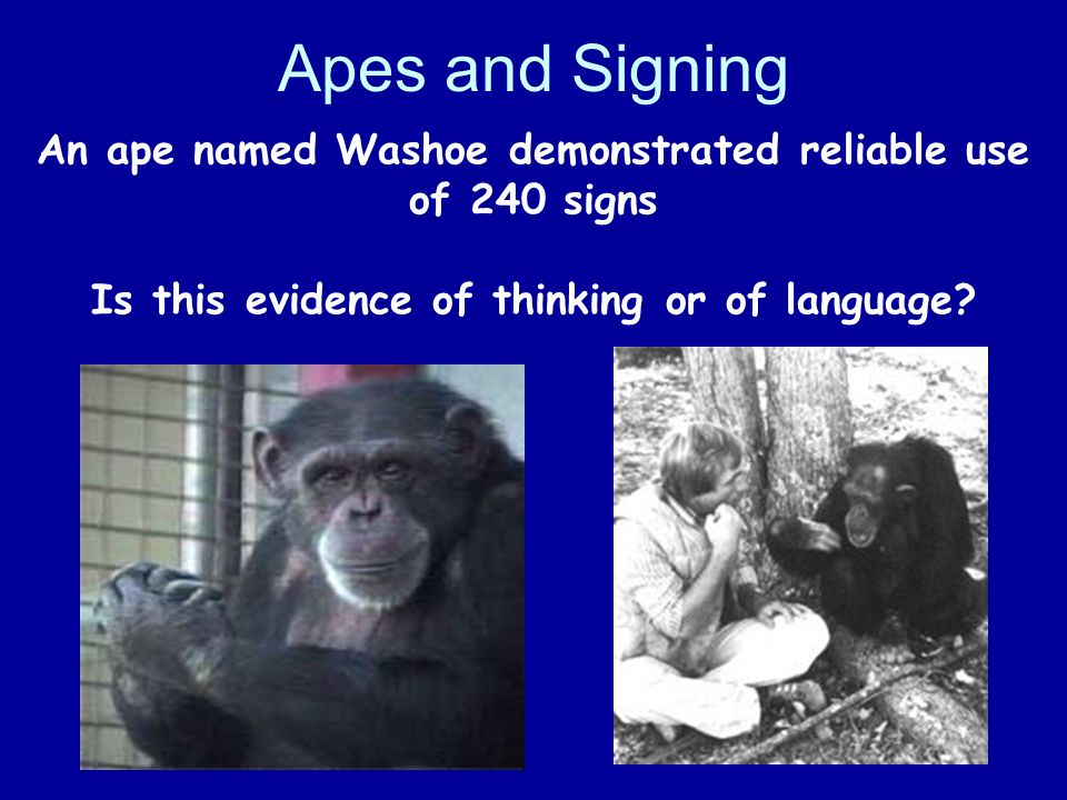 Apes and Signing An ape named Washoe demonstrated reliable use of 240 signs Is this evidence of thinking or of language
