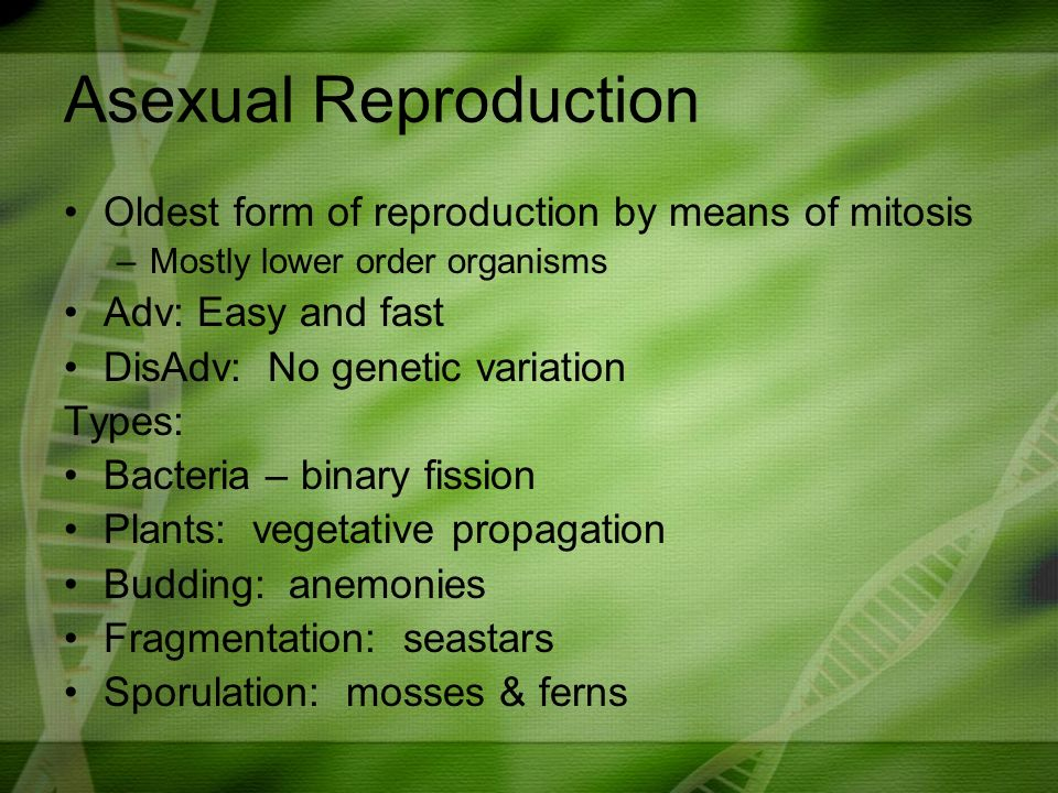 Mosses asexual reproduction in bacteria