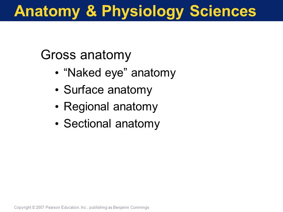 An Introduction To Anatomy Physiology An Introduction To Anatomy