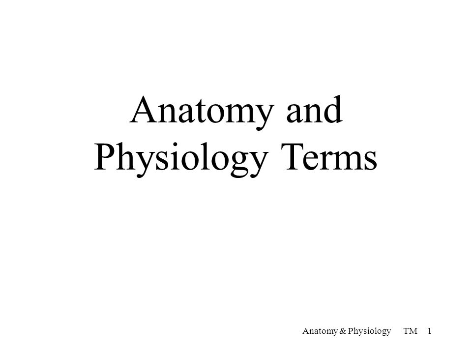 Anatomy and Physiology Terms Anatomy & Physiology TM ppt download