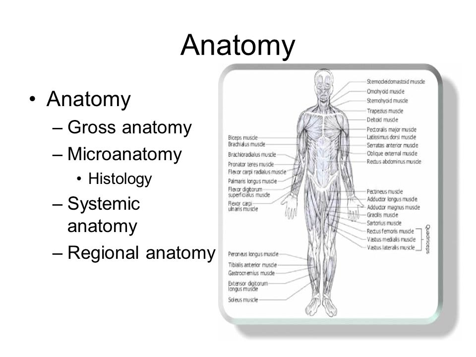 Anatomical Terminology Or the basics for everything you need to know ...