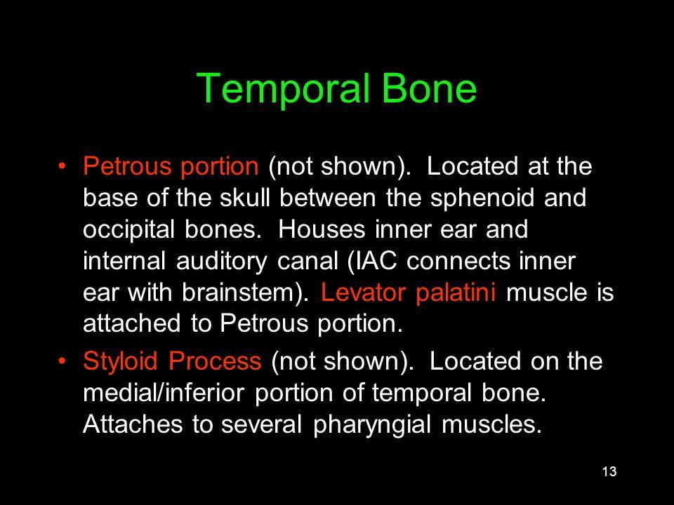 Internal Auditory Canal Anatomy Choice Image - human body anatomy