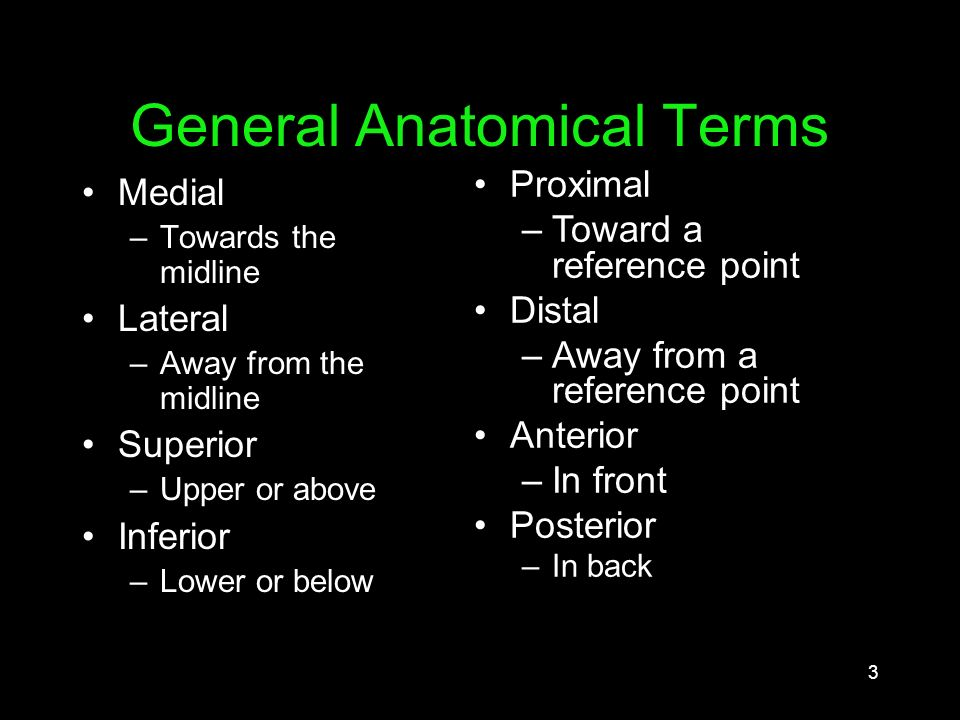 1 Anatomy and Physiology Outer Ear Middle Ear Inner Ear Central ...