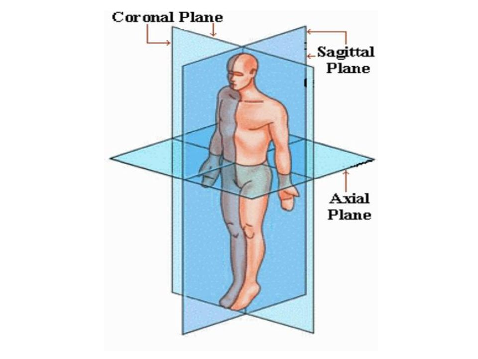 Anatomical Directional Terms Anterior Ventral In Front Of
