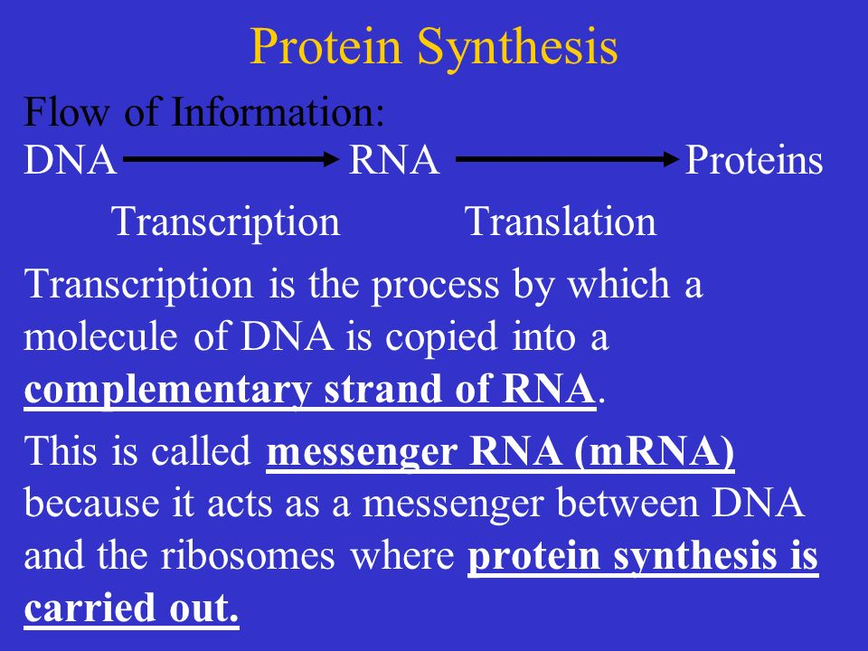 DNA mRNA Transcription Introduction The Central Dogma of